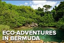 Eco Adventures in Bermuda / In terms of natural beauty, there are few places in the world that can match Bermuda. But the scenery is just the beginning. Whether you're getting up-close-and-personal with a humpback whale or venturing into the heart of a lush jungle, these ecotourism adventures will expand your mind and leave you with a greater appreciation of Mother Nature.