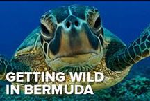 Getting Wild in Bermuda / Bermuda is wild! From the deeps of the ocean to high in the palm trees, keep your eyes peeled for one of the many animals that share the island of Bermuda.
