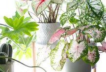 House Plants / | House Plants | Hard to Kill Plants | Easy to Maintain | Low Light Plants | Hanging Plants | Succulents | Macrame Plant Holders | Plant Shelves |