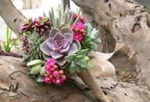 Bouquets: Cactus and Succulents / Cactus and succulent bridal bouquets. #wedding #weddingbouquet #bridalbouquet #cactusbouquet #cactusbridalbouquet #cactusweddingbouquet #desertbouquet #southwesternbouquet #succulentbouquet #succulentbridalbouquet #succulentweddingbouquet #cactusandsucculentbouquet #cactusandsuccultentbridalbouquet #cactusandsucculentweddingbouquet