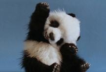 Too Cute! / by Kendra Lesley Moke