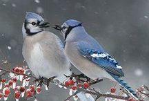 Beautiful Birds / by Jen