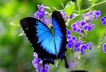 Butterflies & Ladybugs / by Jen