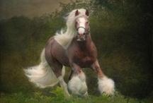 Horses / by Jen