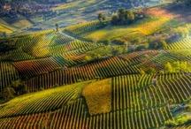Italy & Sicily / by Jen