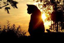 Sunrise/Sunset & Silhouettes / by Jen