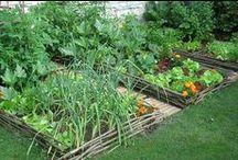 ☘ Potager et jardinage ☘ / En souvenir de mon Pépé - Gustave Fauveaux - qui adorait jardiner et qui avait un des plus beaux potager du quartier ! / by Nathalie DAOUT - Formatrice
