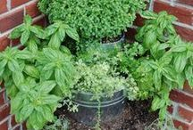 Growing Herbs & Flowers