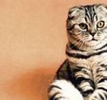 Chats : animaux / Les plus photos de chats en tout genre !