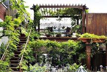 garden / plants | ideas | garden scape