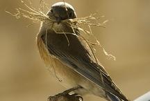 Birds<3 / by Shanon Phillips