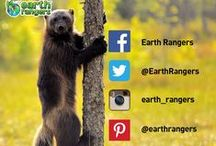 For Parents / Earth Rangers is a non-profit organization dedicated to educating and inspiring children to Bring Back the Wild™.  Our focus is to communicate to children a positive science – based message on the importance of protecting biodiversity and adopting more sustainable behaviours.