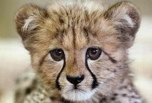 Animals We Love! / The most adorable animals from around the world.