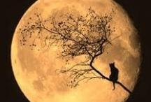 Love Affair With The Moon