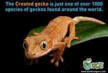 Weird but True / Fun facts and wacky discoveries about our planet.