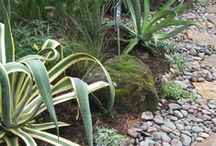 Rock gardens/Dry creek beds etc / by Jeanie Hunt