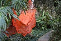 Orange ya glad..... / by Linda Lime in the Coconut