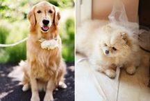 Las Mascotas y tu boda!! / invitados realmente especiales y que forman parte de tu familia... las mascotas!!