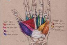 massage / massage | muscles | mobility