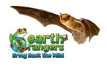Bats / Discover amazing facts about bats and take action to help protect Little Brown Bats by starting a Bring Back the Wild campaign!   https://www.earthrangers.com/bbtw/en/?banimal=34