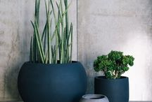 Plants Indoor / I believe plants help in creating a calm peaceful healthy home