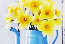 Yellow Flowers / yellow flowers brighten up your day!