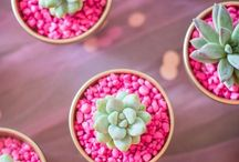 Succulents Indoor / This board will show you how to grow your own succulents,  trendy ceramics to showcase them and teach you how to look after them! succulents to decorate your home...easy to maintain, great ways to liven up your living spaces