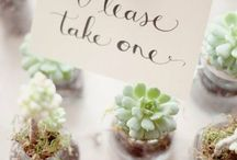 Wedding Favours / Wedding favours sure to delight evrryone!