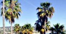 California with kids / Best tips for a family trip to California: what to explore with kids on the Pacific Coast, in L.A., Orange County, San Francisco, San Diego and the National Parks. / Tipps für eine Familienreise nach Kalifornien, die schönsten Erlebnisse mit KIndern an der pazifischen Küste, Los Angeles, Orange County, San Francisco und den Nationalparks.