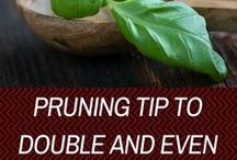 Indoor Gardening Tips / Useful Tips & Ideas on Gardening. Indoor Gardening Tips. Indoor Plants. Indoor Herb Gardening. How to Grow Herbs & Plants.