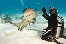 Sharks / by Simon MacDougall Sadava