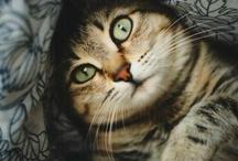 All the little kitties / by Erin Riordan