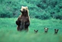 Bear Story / by Erin Riordan