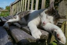 Cats of the National Trust / Here are a few of our favourite felines found at our places, from our four-pawed residents and visitors to cats in our collections. / by National Trust