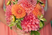 Dahlia Weddings / Dahlias are a great flower to choose for their large range of color. They are extremely versatile in that they can be formal or casual depending on how they are arranged. The fact that they are budget friendly when they are in season doesn't hurt either...