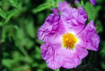 Flora of Pantelleria / Flowers, plants and colors of volcanic island