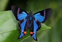 Butterflies / by Jeannie Pryor-Graves