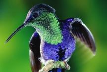 Hummingbirds / by Jeannie Pryor-Graves