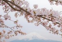 La primavera......
