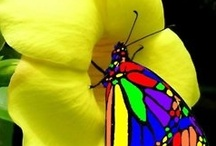 ~Butterflies~ / by Tasha Rollins Arrington