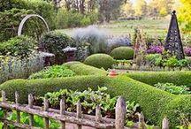 growing food & gardening / growing food, gardening, topiary, and trees! / by Annifaye Jones