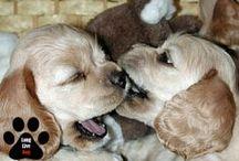 Puppies at Home