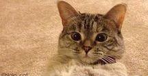 nala cat =^^= / nala una adorable gatita junto a su hermano coffie