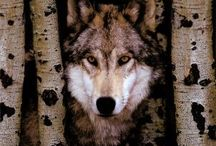 Wolves & Wild Ones