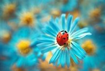 lady bugs / by kelli :)