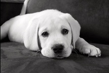 Dogs & Puppies / Looking for all things dog and puppy related? Then you will love AllPosters' selection of adorable dog pictures! From Huskies to Chihuahuas we have them all! Browse our collection: http://go.art.com/01VoBO7