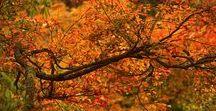 Fall inspire / mood board d'automne