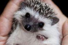 Sweet tiny animals