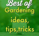 Garden ✿ / Learn everything there is know about starting and maintaining your garden and outdoor living space. From flowers to veggies, discover what works in your garden and for what time of the year. Get the kids involved and make it a family affair! Request a copy of our popular new ebook filled with 22 TRIED & TRUE cleaning product recipes using simple ingredients from home --->http://bit.ly/2agWHPK