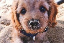 Cute Pups!  / Warning! Will make you want a puppy immediately!